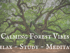 CALMING FOREST VIBES   Relax ~ Study ~ Meditate