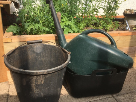 Activity of the day: Water, water everywhere: use your waste water to keep your plants happy!