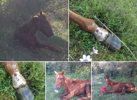 Σχετικά με το άλογο στην Βέροια ~ About the horse in Veroia