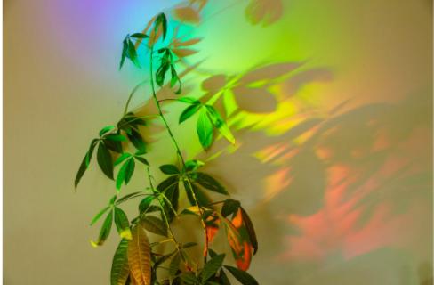 A plant in a rainbow colour light