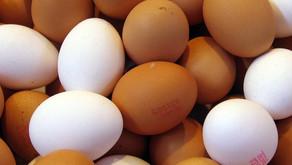 ¿Te atreverías a probar huevos de gallina con dieta a base de semillas de cáñamo?