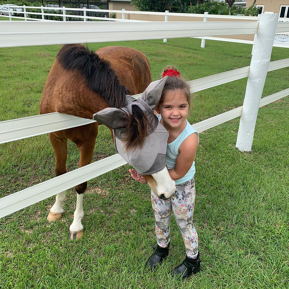 Chip is one of our new boarders!  His full name is Child's Play Chip's Ahoy and he is only 3 years old.  Chip is a Welsh pony and will grow up to make a young horseback rider very happy!  He is being trained by Rachel Shearing and loved by all.  We can't wait to see him riding around our arena!