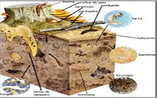 Figura 6: Representação da ação de organismos vivos nos solos