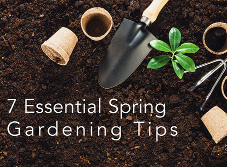 7 Essential Spring Gardening Tips