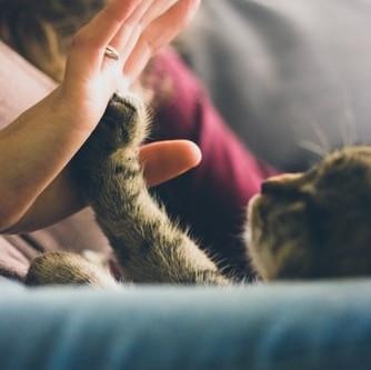 ri-SOCIAL-izzare con l'aiuto degli animali (di Cinzia Sala)