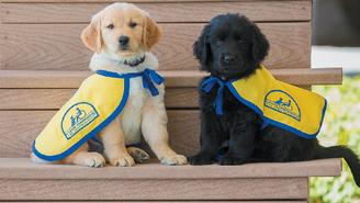 Разлика помеѓу кучиња што асистираат, даваат емоционална поддршка и вршат терапевтско дејство