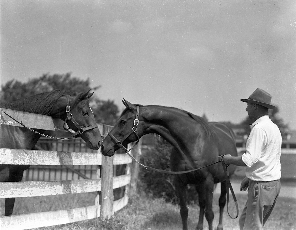 1941 Triple Crown winner Whirlaway and his dam, Dustwhirl.