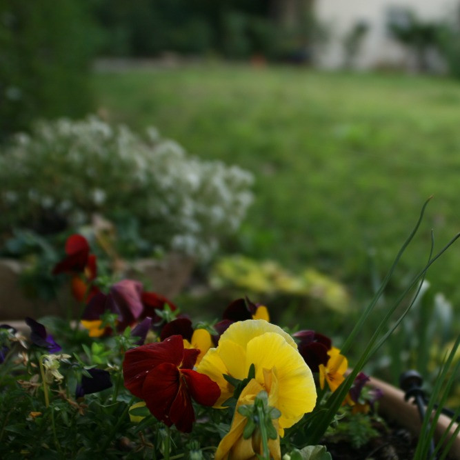 A garden with flowers and grass