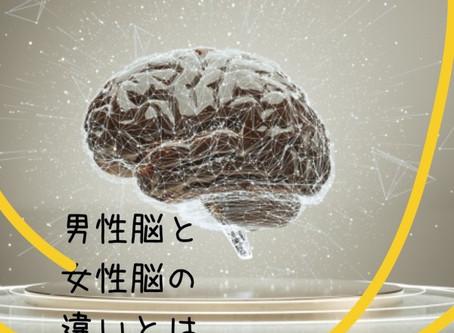 整体における男性脳と女性脳の違いとは