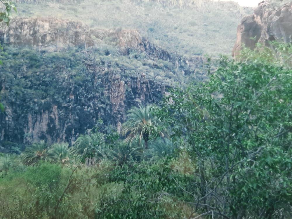The river Rio Comondu runs thru the base of this palm strewn oasis canyon