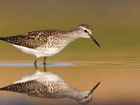It's World Shorebirds Day