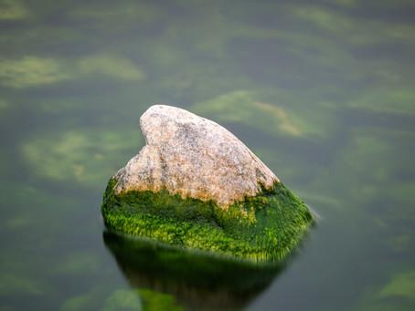 How do algae affect water quality?