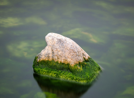 How do algae affect water quality?