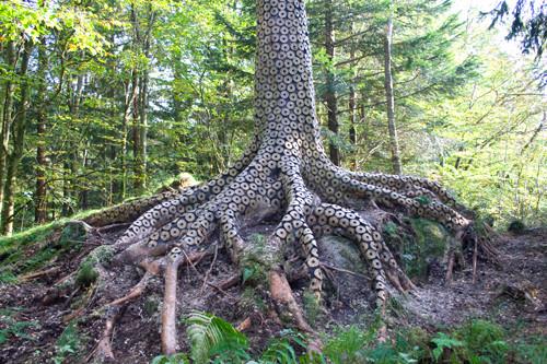 arbre insolite stuart frost