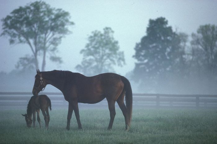 Reines and Mares