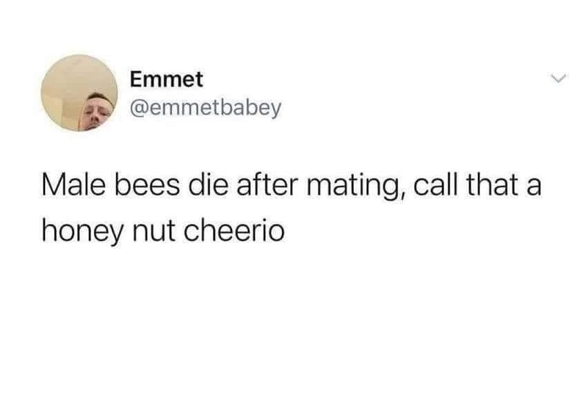 Male bees die after mating call that a honey nut cheerio Meme & Many More Funny Memes!