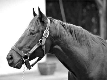 Amoureux du cheval : le saviez-vous ?