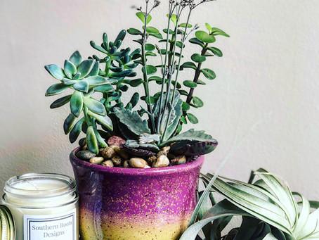 Succulents don't Succ!!