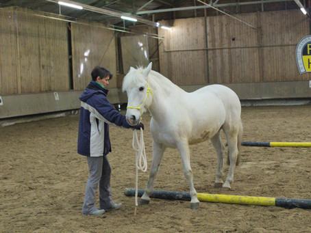 Pferdetraining ist Konditionierung