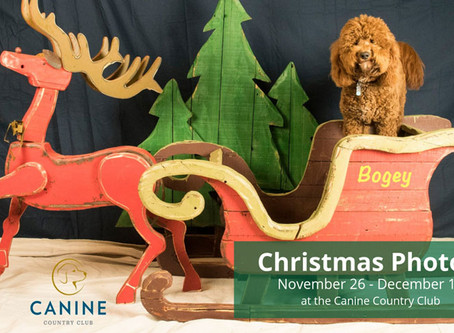 DOGGIE CHRISTMAS PHOTOS ARE BACK AT THE CANINE COUNTRY CLUB OF ARKANSAS