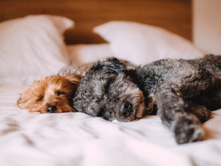 HVAC for Households With Pets