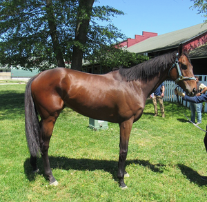 Rocky The Kid. OTTB available for purchase. CANTER USA, CANTER Delaware
