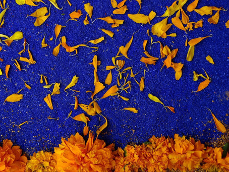 La flor que ilumina nuestro camino