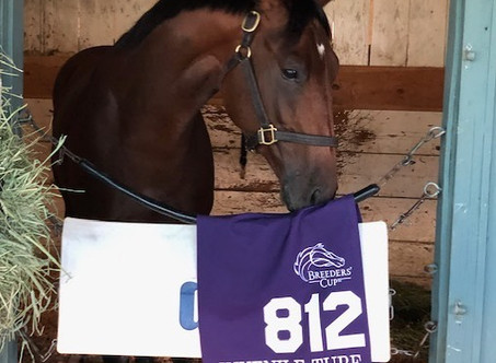 Hit the Road Shows The Syndicate Experience with Taste of Victory in Breeders' Cup
