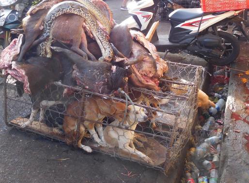 Wuhan: interdiction de consommer des animaux sauvages à Wuhan
