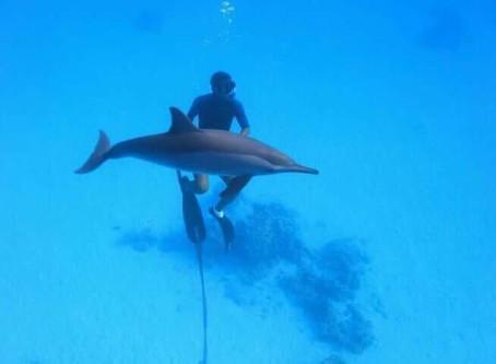 Les dauphins.