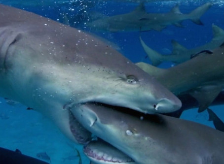 4 Tips for Swimming with Sharks: Successfully Navigate the Post COVID-19 Ecommerce Landscape