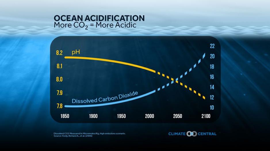 oceans, acidification, global warming