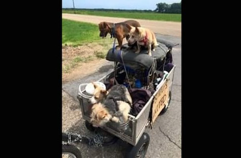 Animal Rescuers Help Homeless Man Travel Across the Country with His 11 Stray Dogs
