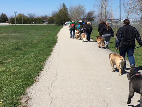 The Structured Walk – Why it's so Important