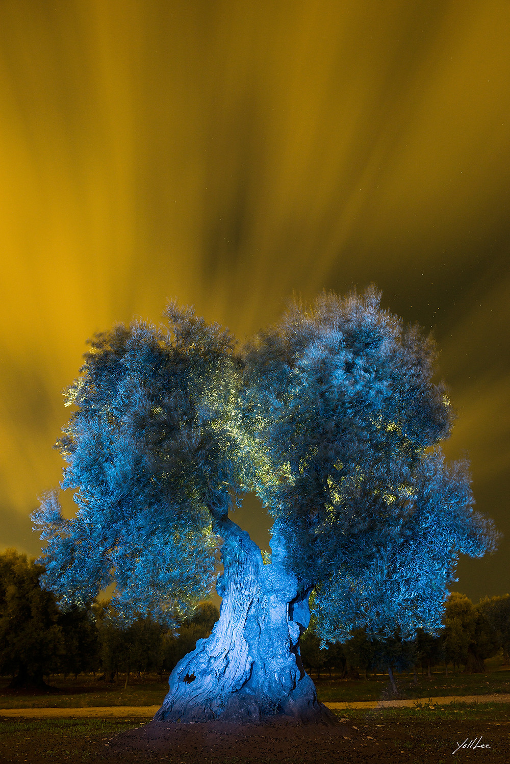 Flowing of orange clouds and blue olive tree  93x138cm 10 limited edition hahnemuhle Baryta FB, pigment ink-jet print