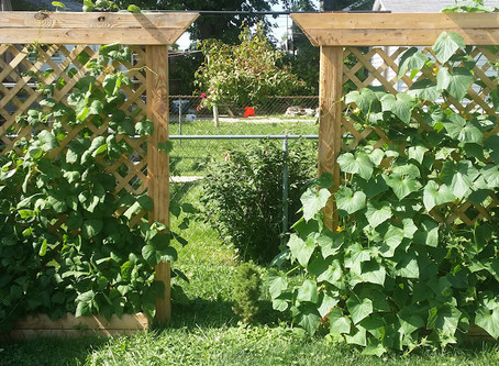 Building a Planter Box with a Trellis