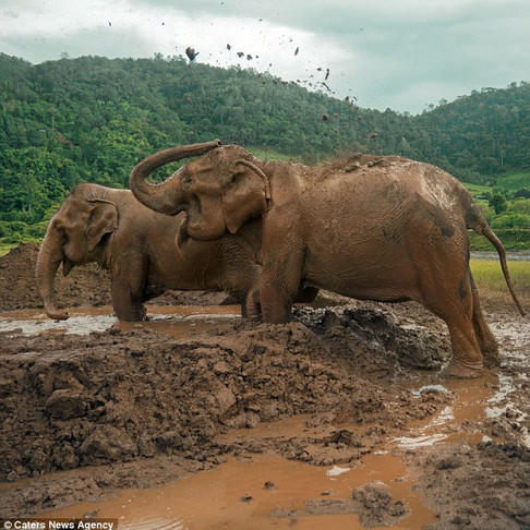 Two Elephants Rescued in Thailand After Spending Nearly 80 Years as Slaves in Captivity