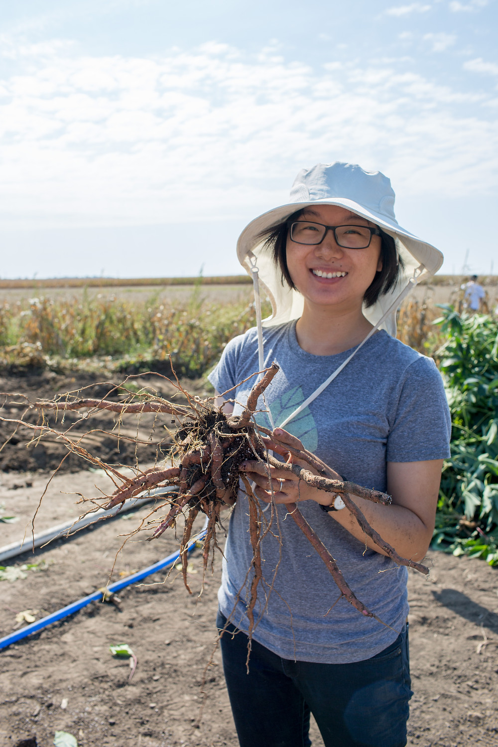 Yu Wang stands in the field holding a cassava root.