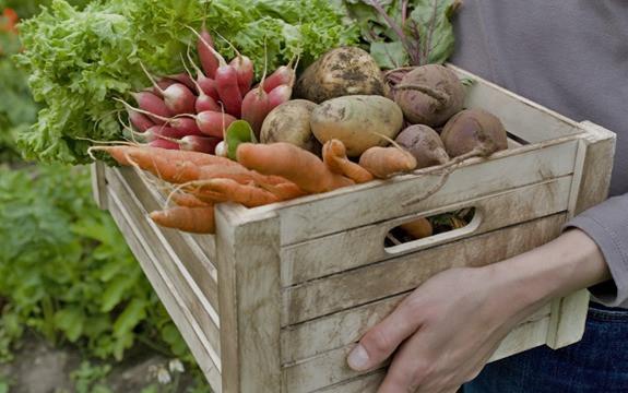 verdura, fruita, pastanagues, patata, productes de l'hort