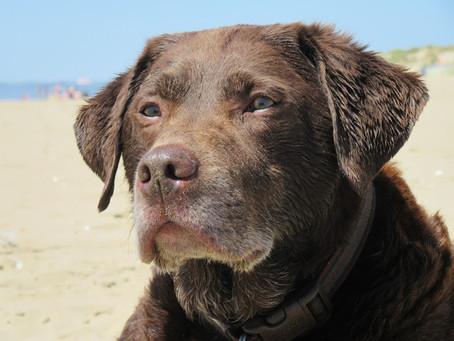 Meet The Ciqurix Company Dogs