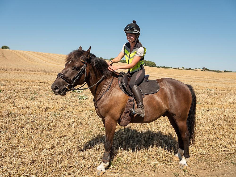 horse woman in cornfield
