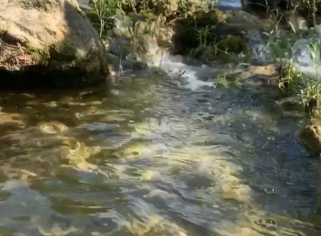 Around Austin-Barton Creek Greenbelt