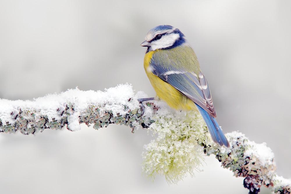 Wildlife, English Garden & Antiques
