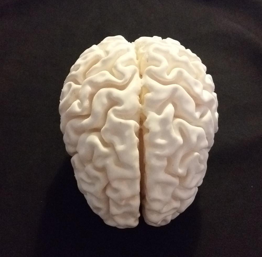 un cervello stampato in 3d da astrati
