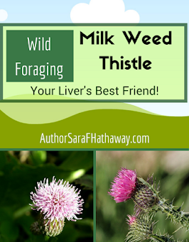 Wild Foraging: Thistle