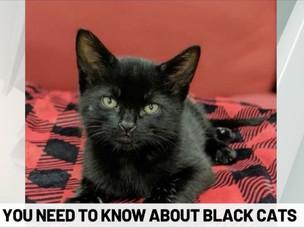 Beautiful, mystical black cats