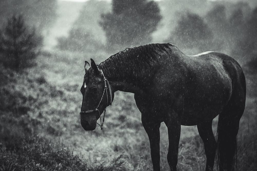 Säiden vaikutus hevoseen