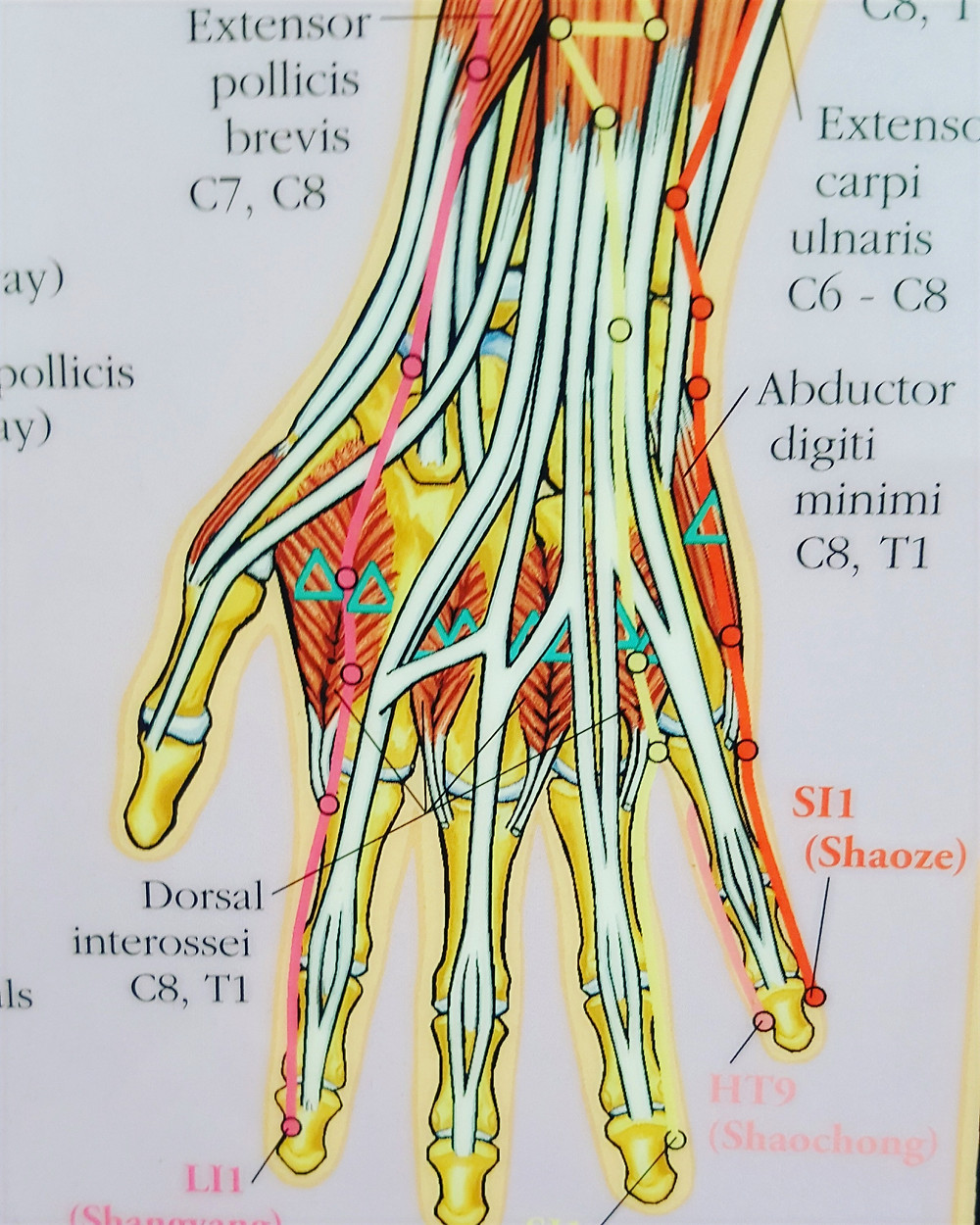 Gua Sha workshop teaches you how to work on the hand