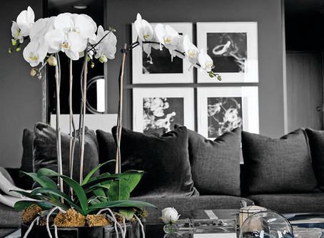 Plantas para cultivar dentro de casa!