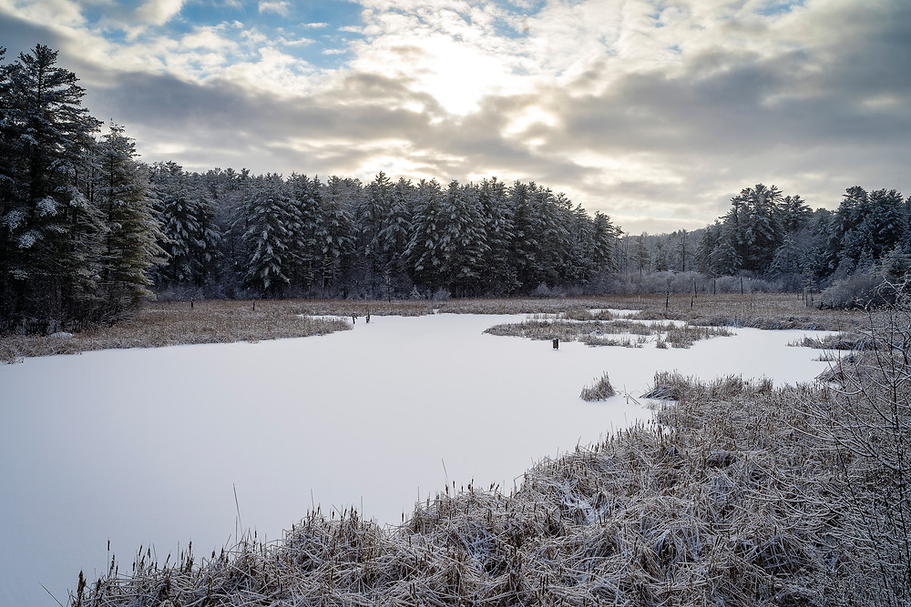 Frozen meadow, covered with fresh snow